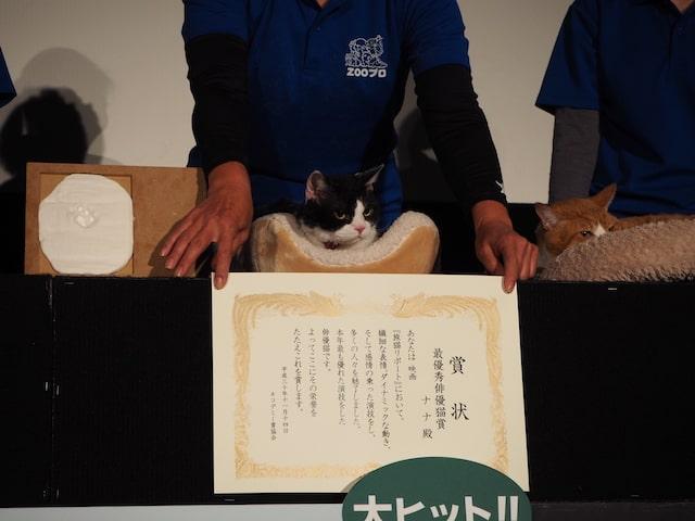 最優秀主演猫賞を受賞して賞状を渡される猫のナナ