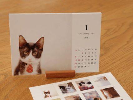 ねこミュニケーターが撮影、保護猫カフェのチャリティーカレンダー