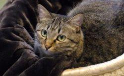 今年は18店舗が参加!とろけるような毛布で猫と戯れる「とろふにゃ保護猫カフェ」が開催中