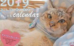 幸せをつかんだ猫のチャリティーカレンダー、福岡ねこともの会が発売中
