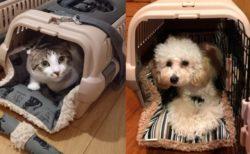 猫を運ぶ時の快適性がアップ!ペットキャリーにセットできる2WAYクッション