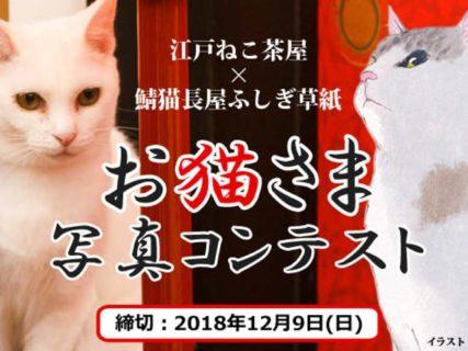 浮世絵の世界で遊べる猫カフェ「江戸ねこ茶屋」が写真コンテストを開催