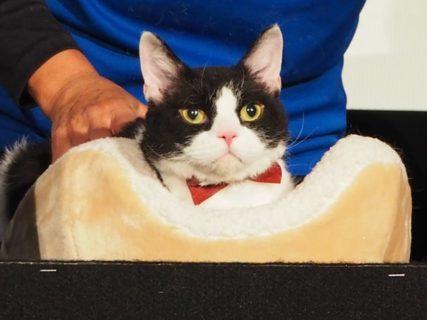 人気のスター猫を勝手に表彰するネコデミー賞授賞式、旅猫リポートのナナが受賞