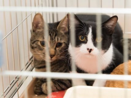 日本最大級の保護猫&保護犬譲渡会「ブレーメンパーク」が幕張メッセで開催