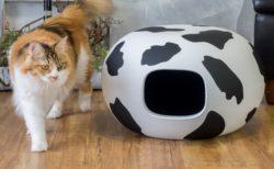 かまくら型のキャットハウス「猫かまくら」に可愛い牛柄が登場したニャ