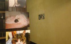 猫を通じてボーダレスに繋がる写真展「ホテルぬこ・ぬこでボーダレス展」大阪で開催中