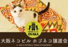 5階建ての全フロアが猫づくしのネコビル、子猫を含む初の譲渡会を開催