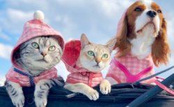 今秋誕生した猫グッズブランド「ねこにすと」の販売イベントが新潟で開催