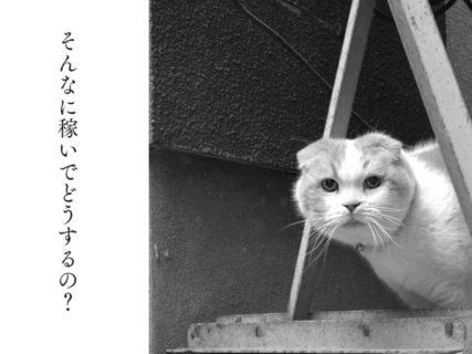 養老孟司が痛快に語る最新エッセイ「猫も老人も、役立たずでけっこう」