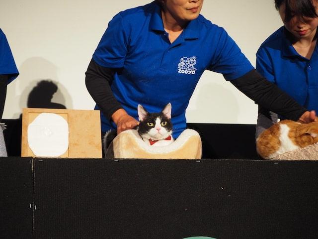 最優秀主演猫賞に輝いた猫のナナ