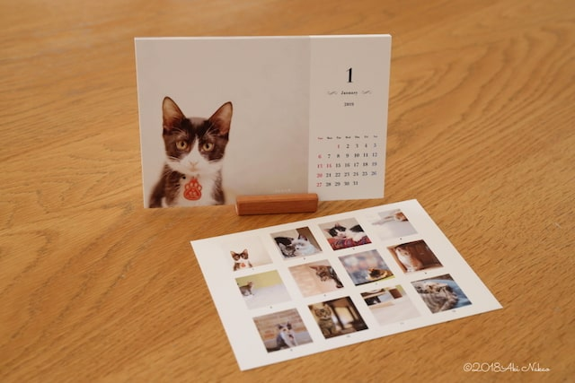 ねこミュニケーター、「nanonya.Aki(なのにゃーあき)」さんによる保護猫カフェと保護猫を応援するチャリティカレンダー