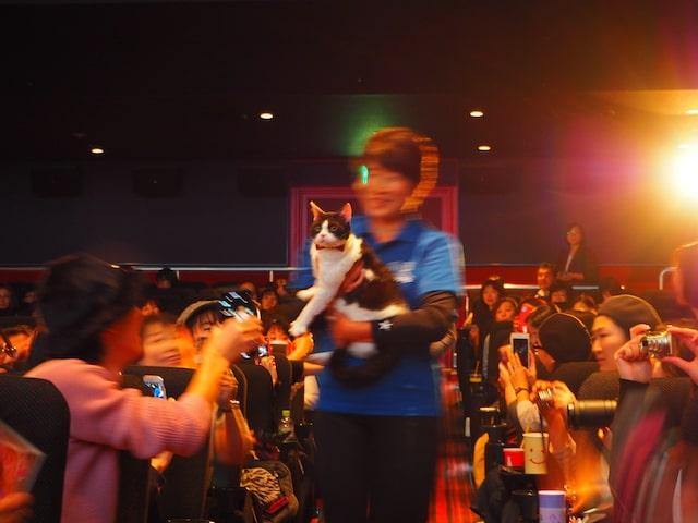 トレーナーに抱かれて登場する猫のナナ