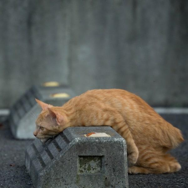 車止めに体を止められてしまった茶トラ猫 by 残念すぎるネコ