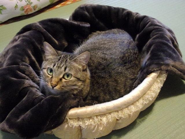 ベルメゾン「とろけるような毛布」で暖まる猫