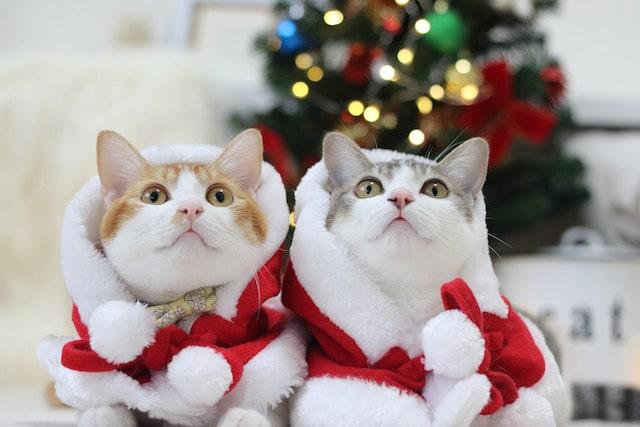 サンタクロースの格好にコスプレした猫たち by Riepoyonn