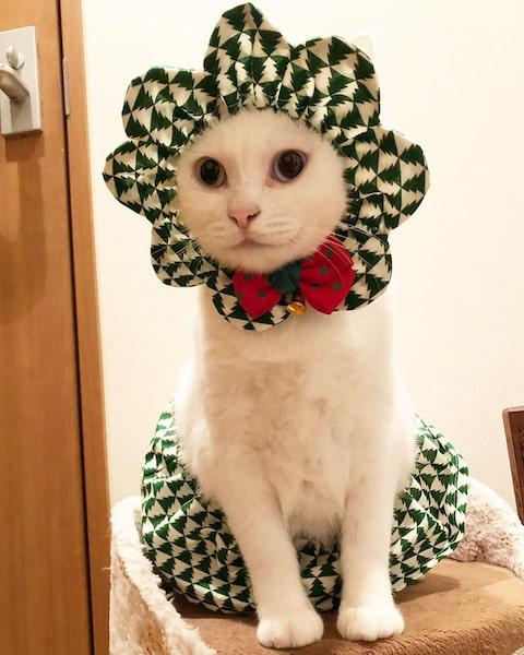 ザビエルスカートセット クリスマス柄を身に着けた猫 by Mai Yamamoto