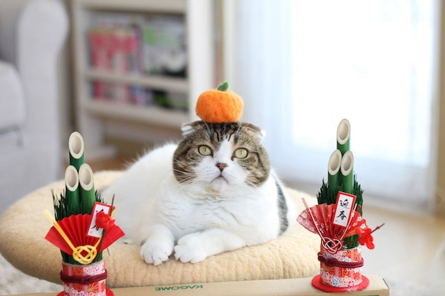 門松とミカンでお正月気分の猫 by jun.k