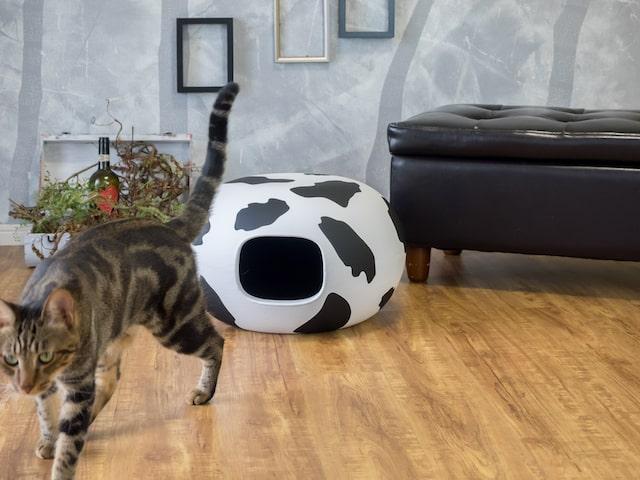 牛柄のキャットハウス「猫かまくら」と猫