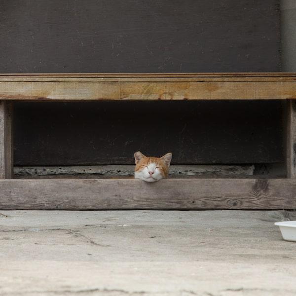 首だけ出してスヤスヤ眠るネコ by 残念すぎるネコ