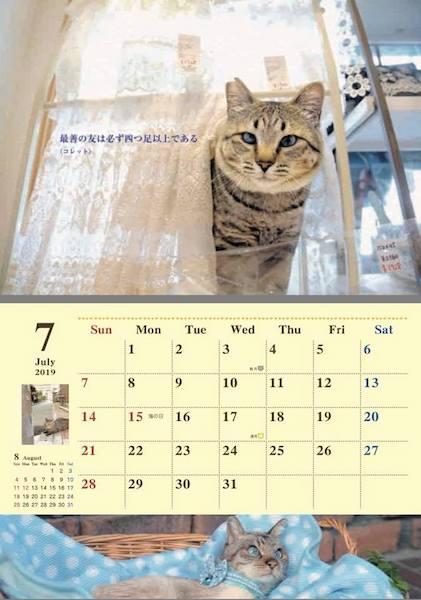 2019年7月の保護猫カレンダー by 福岡ねこともの会