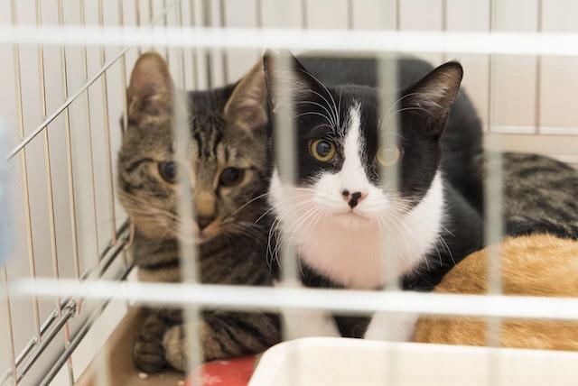 ブレーメンパークに参加した保護猫たち