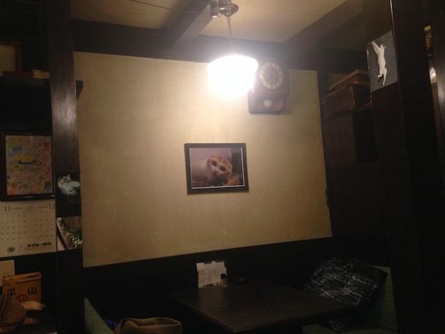 店内に展示された猫の写真 by ホテルぬこ・ぬこでボーダレス展
