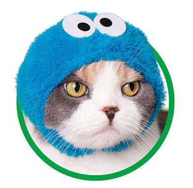 クッキーモンスター by かわいい猫のかぶりもの