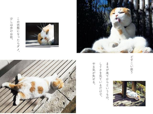 養老孟司氏の愛猫「まる」 by 書籍「猫も老人も、役立たずでけっこう」