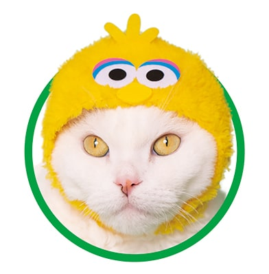 ビッグバード by かわいい猫のかぶりもの