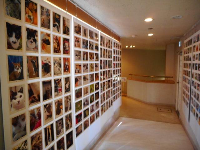 大佛次郎記念館のネコ写真の展示風景