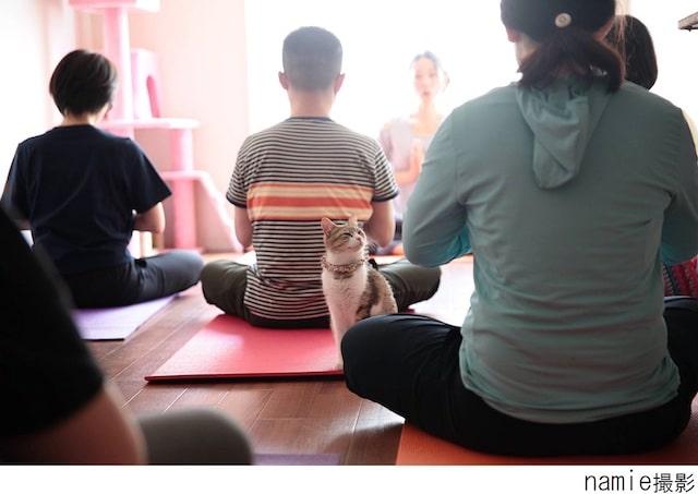猫ヨガの開催イメージ