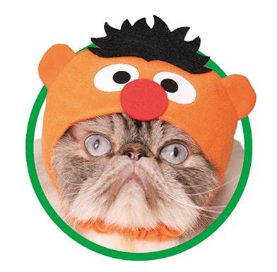アーニー by かわいい猫のかぶりもの