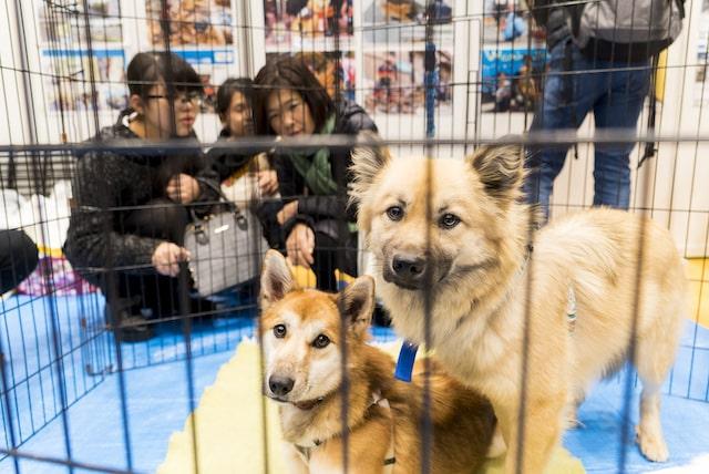 ブレーメンパークに参加した保護犬たち