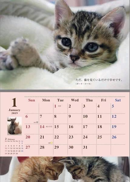 2019年1月の保護猫カレンダー by 福岡ねこともの会