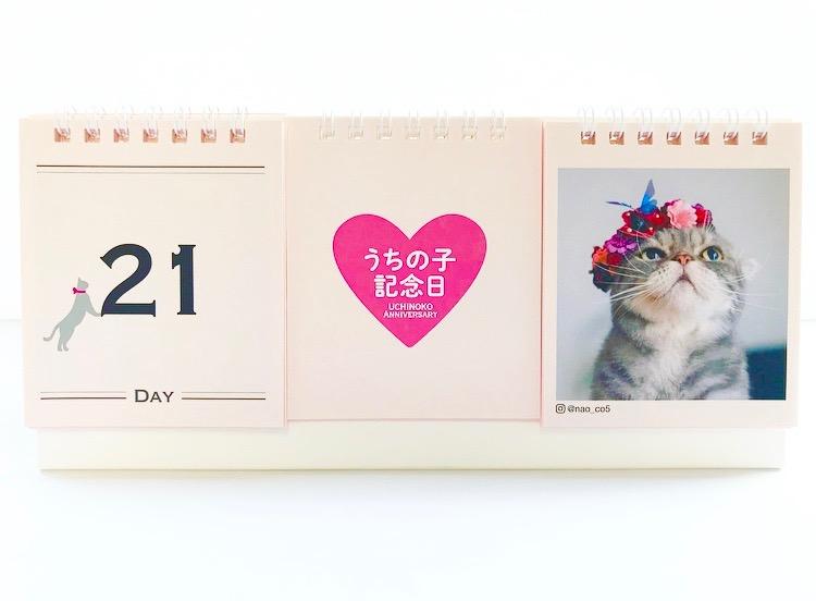 おしゃれな日めくり猫カレンダー「ニャンカレ2019-花と猫-」を斜め正面から見たイメージ