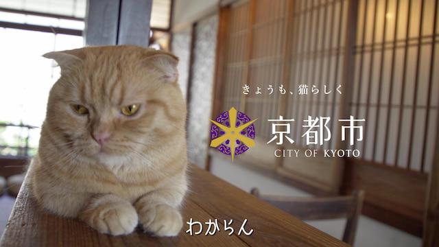 京都市のWEB限定動画「きょうの,みゃーこ」
