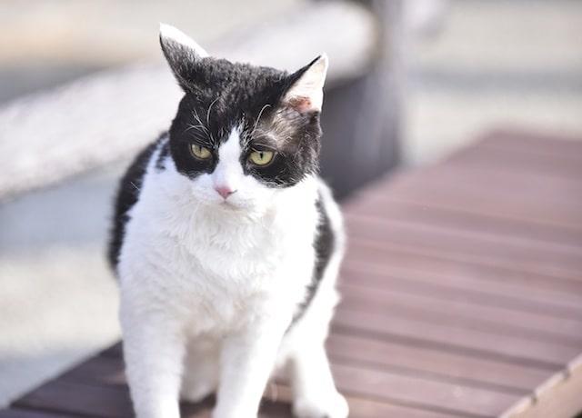 映画、「トラさん~僕が猫になったワケ~」の写真投稿キャンペーン
