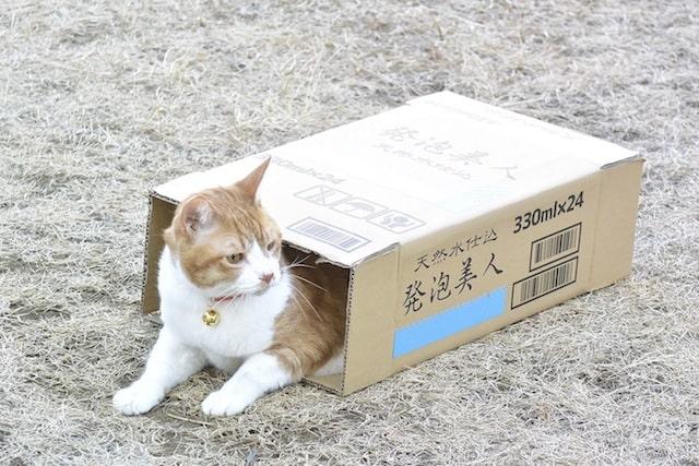 ダンボールに入るネコ by 映画「トラさん~僕が猫になったワケ~」