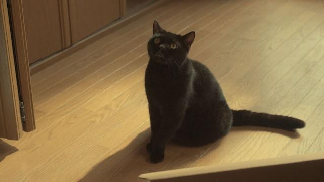猫探偵の事件簿 第1話 「天井裏に消えた猫」のワンシーン