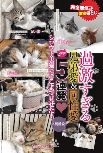 猫同士のラブラブな写真コーナー by 週ニャン大衆 vol.2