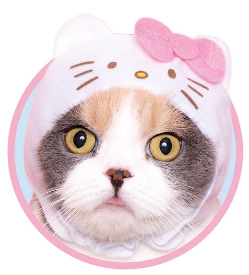 ハローキティ(パステル) by かわいい猫のかぶりもの