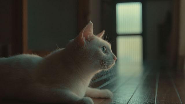 猫探偵の事件簿 第3話 「駆け出し猫探偵のほろ苦事件簿」のワンシーン