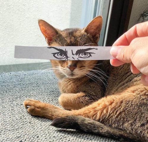 モンタージュでコミカルな写真を撮る猫 by 週ニャン大衆 vol.2
