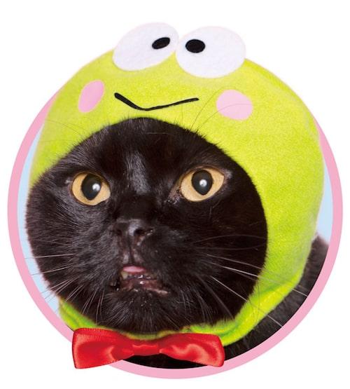 けろけろけろっぴ by かわいい猫のかぶりもの