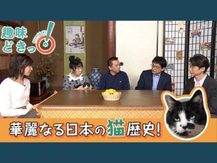 今は第3次猫ブーム!?NHK Eテレで「不思議な猫世界」全8回を放送開始