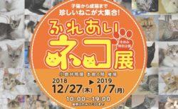 世界中の珍しい猫と触れ合える「ふれあいねこ展」が北九州市の小倉にある「小倉井筒屋」で開催