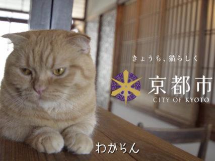 倉木麻衣と共演した人気ネコが主役!京都市のPR動画「きょうの,みゃーこ」全6篇が公開