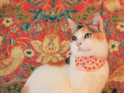 初回プレゼントも♪ 保護猫を飼っているとお得なキャットシッターサービス「ネコリパシッター」が登場