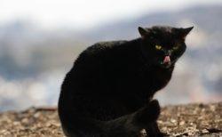 北山宏光さんがネコを演じる映画「トラさん~僕が猫になったワケ~」写真投稿キャンペーンを開始