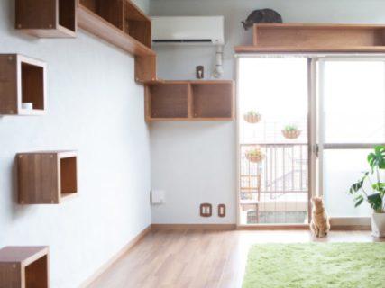 猫物件専門の不動産会社が保護猫カフェで引っ越し相談会を開催12/14〜